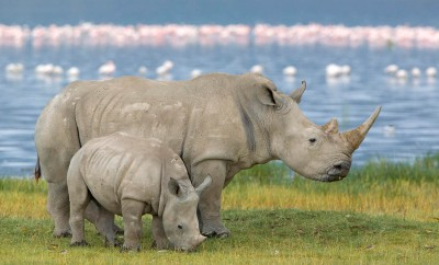 Kenya group safari, experience rhino and flamingo's at Lake Nakuru